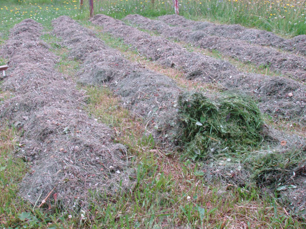 Herstellung von Grassilage Silage
