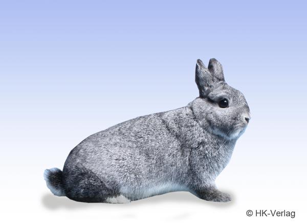 farbenzwerge-chinchilla.jpg